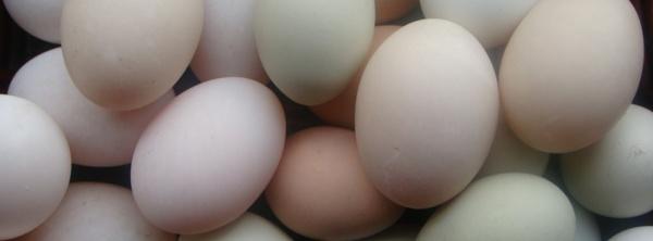 Egg FM